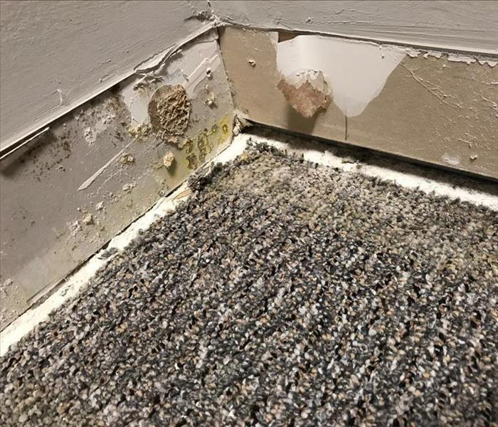 Carpet and Drywall Mold in Commercial Business Before